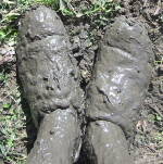 Shoes got a bit muddy
